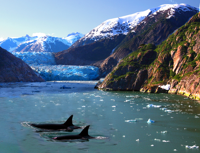 Alaska view with orcas
