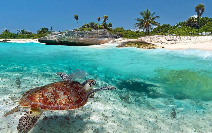 Playa de Carmen sea turtles