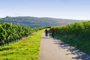 mountain biking through a vineyard